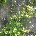 116c mooi bloempjes